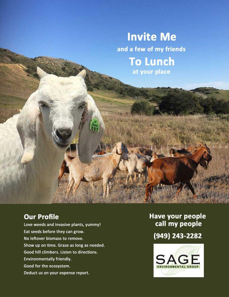 Goat Grazing for Wildland Management - Sage Environmental Group