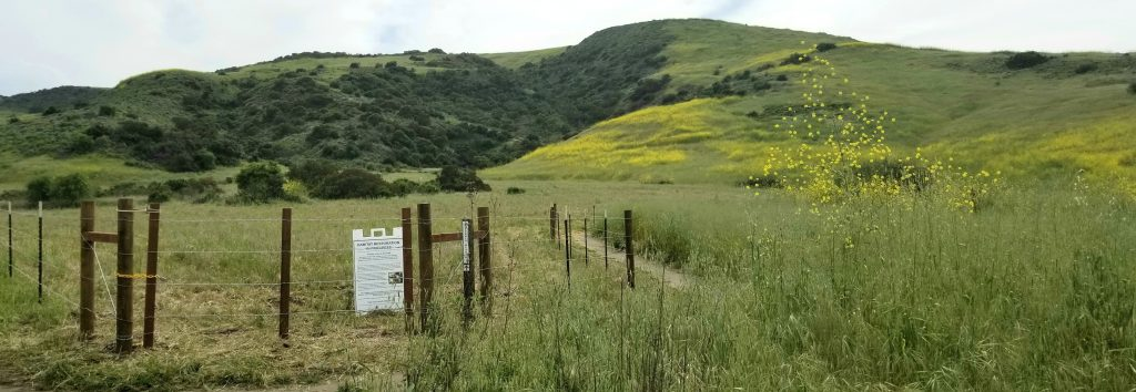 Bommer Canyon Habitat Restoration Using Goat Grazing For Weed Eradication