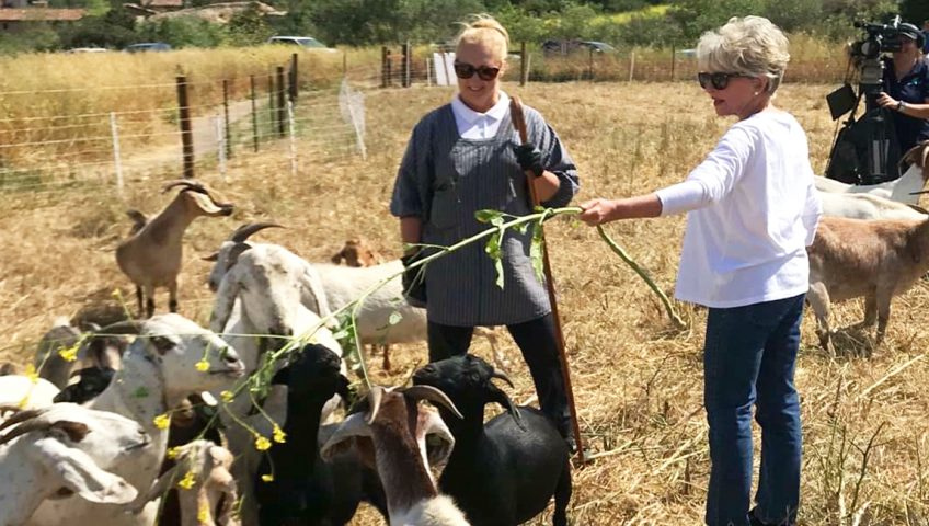 Irvine Mayor Shea Visits Sage Goat Grazing Site at Bommer Canyon