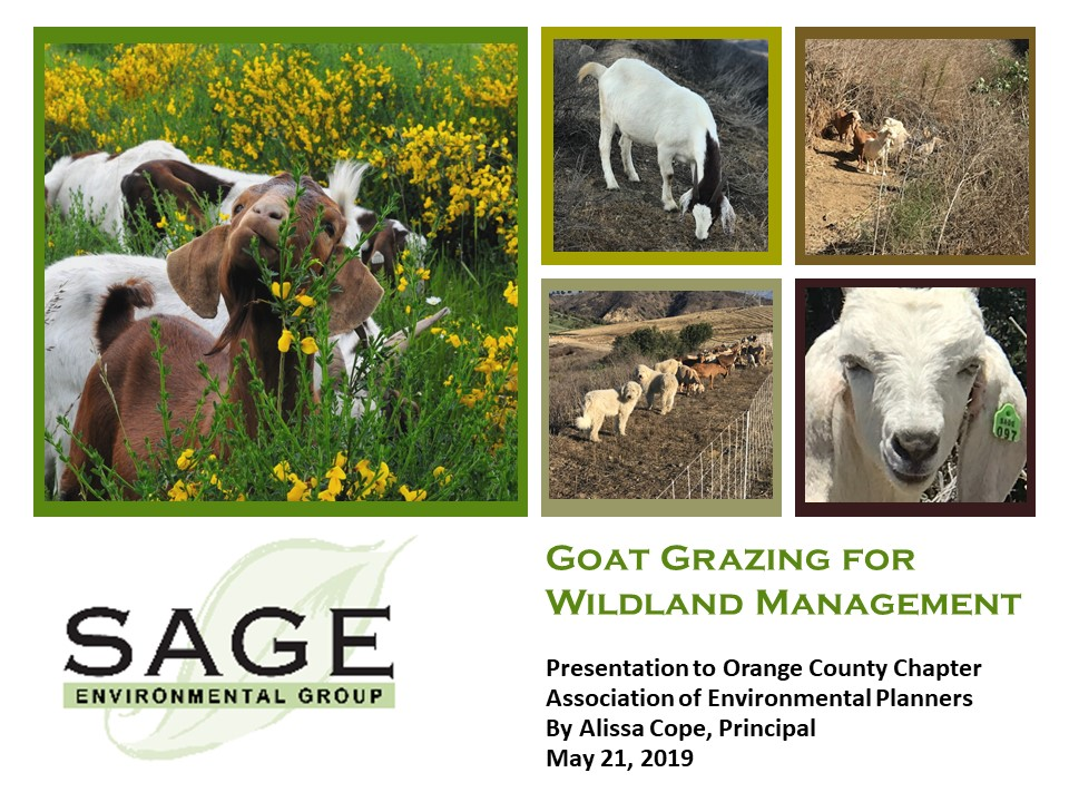 Goat Grazing for Wildland Management Presentation by Sage Environmental Group to OC Association of Environmental Planners May 21 2019