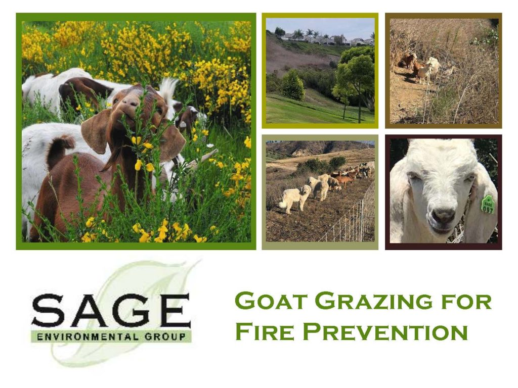 Goat Grazing for Fire Prevention Presentation - Sage Environmental Group