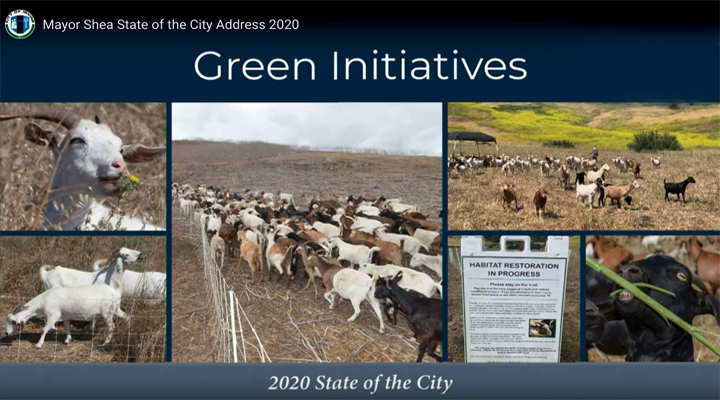 Sage Goat Grazing Featured in Irvine Green Initiatives