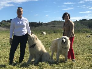 Laguna Niguel City Manager Tamara Letourneau visits goat grazing site at Reef Park. Guard dogs Duke & Tuffy create social distancing.